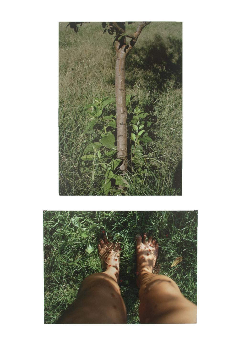 treefeet.jpg