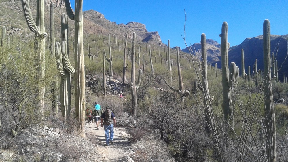 SabinoCanyon desert trail.jpg
