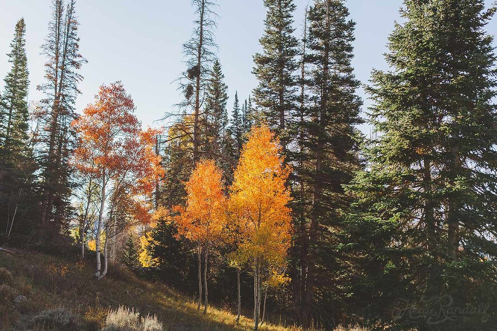 UtahFallLandscape-HeidiRandallStudios-2016-2.jpg