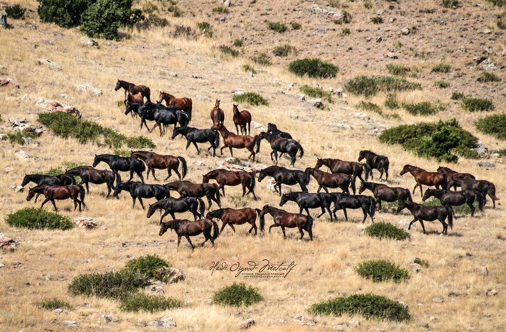 the mare pasture - img_2456.JPG