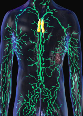 lymphatic_system.jpg