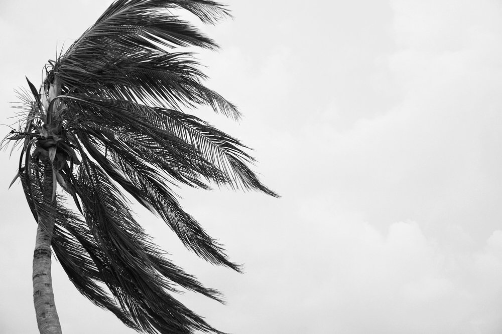 black_and_white_photography_palm_tree.JPG