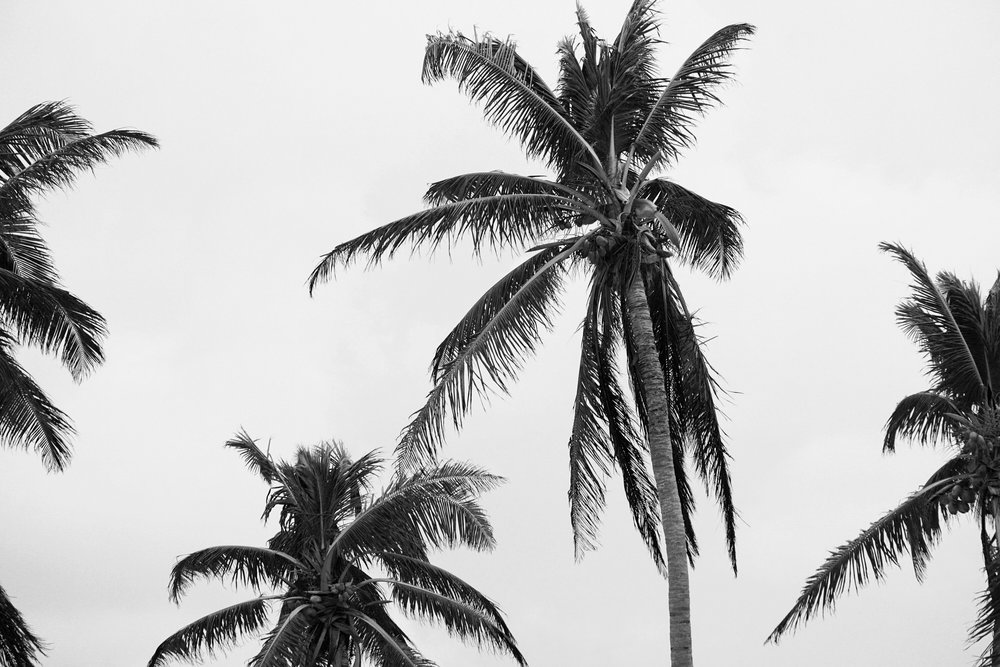 black_and_white_photography_palm_trees.JPG
