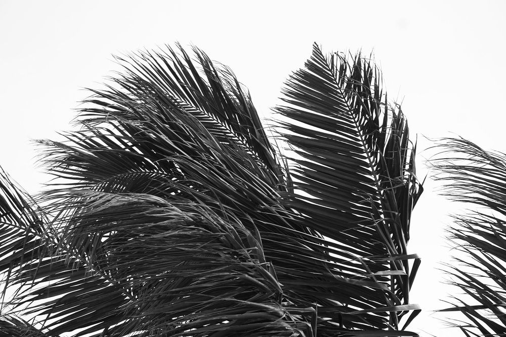 palm_tree_leaves_photography.JPG