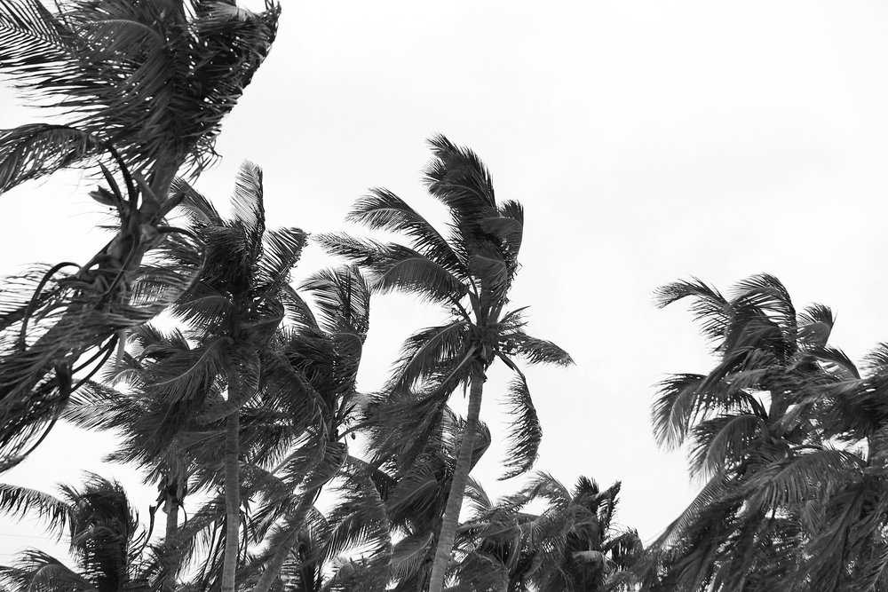 Black and white palm trees photography