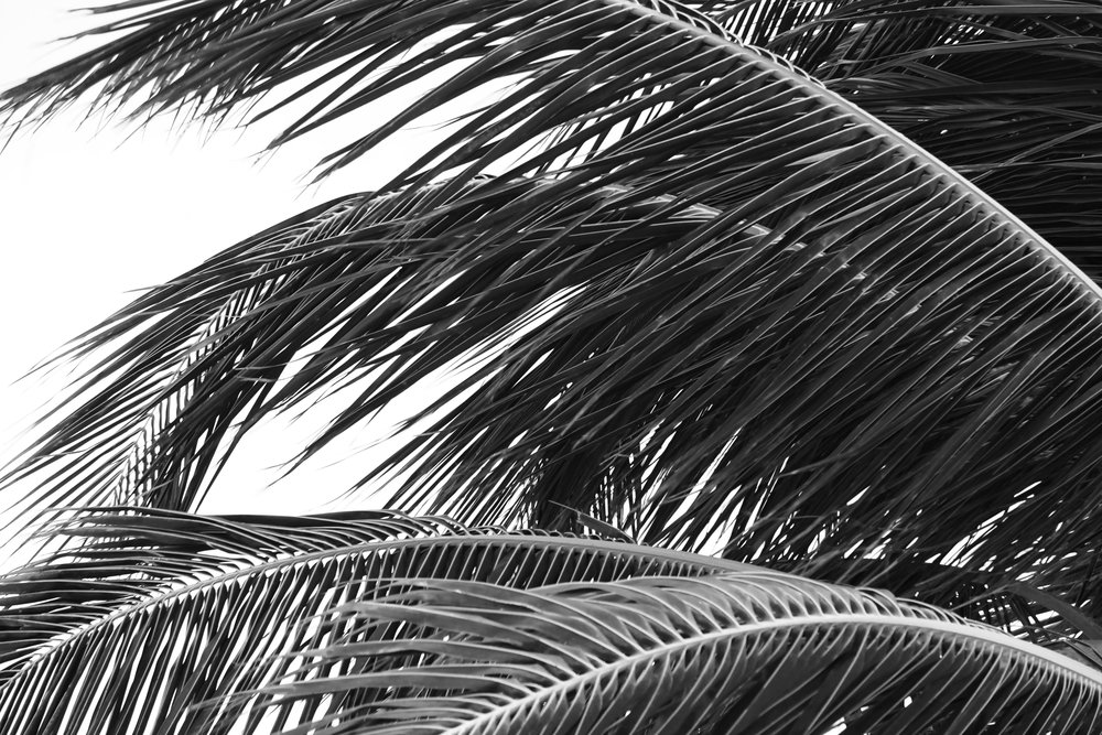 Abstract Black and White Palm Tree Leaves Photography