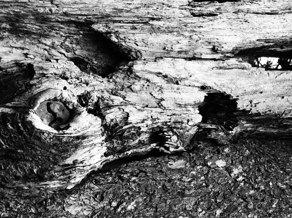 abstract black and white tree photograph