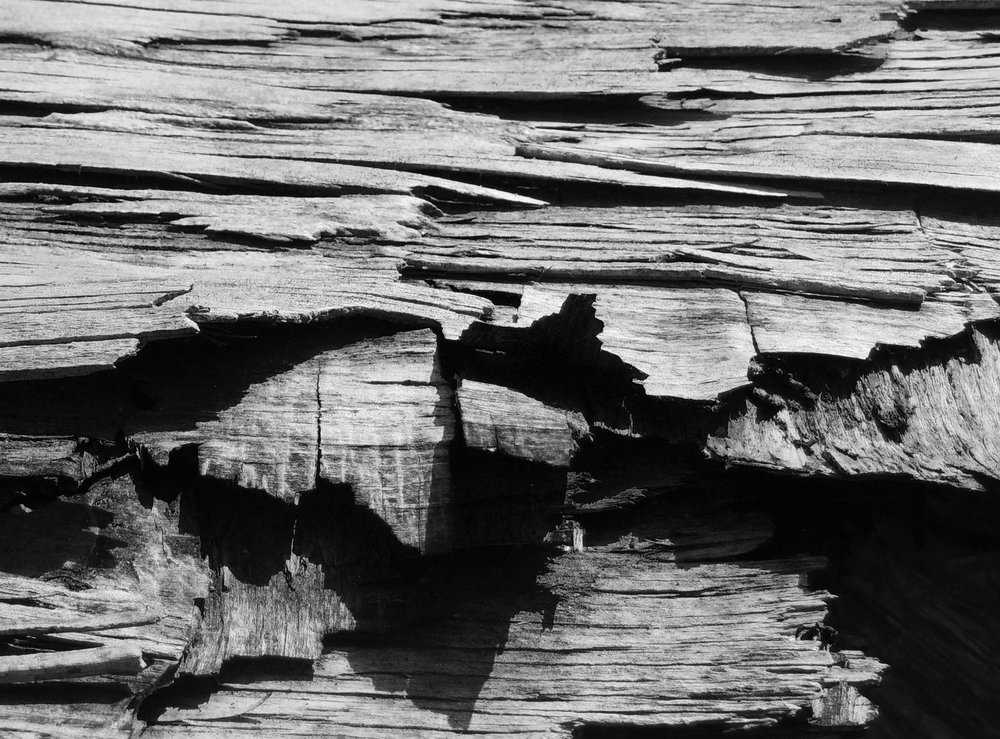 Black and White wood photography