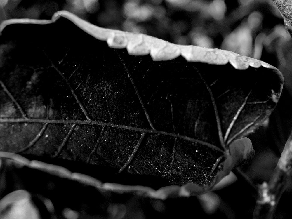abstract_leaf_photograph.jpg