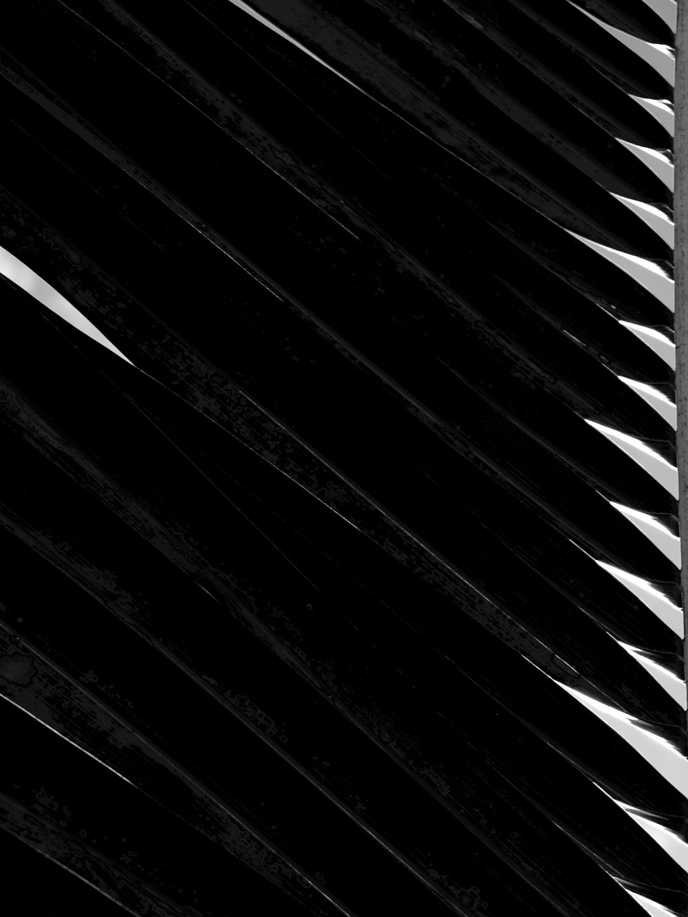 abstract black and white leaf photograph