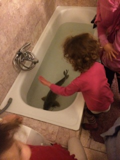 Our pastor's bathtub, carp, and kids.