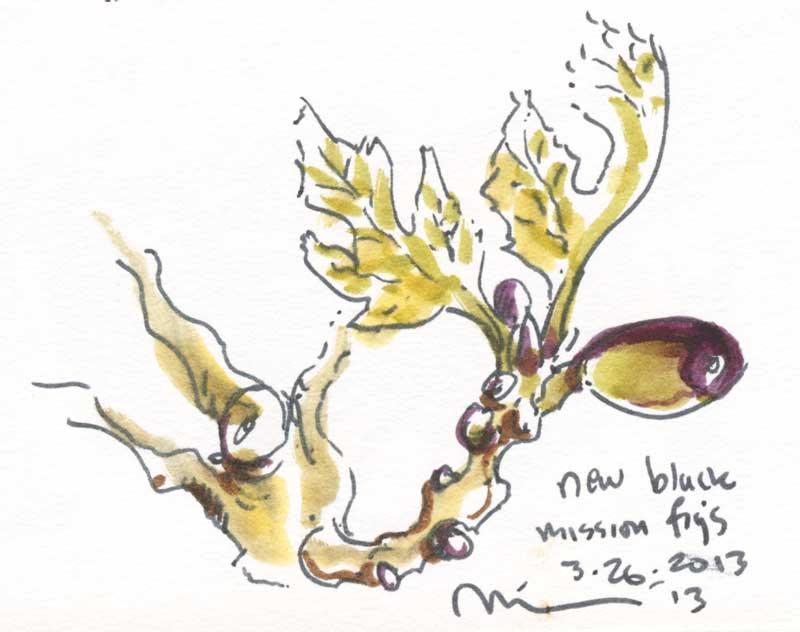 new-black-figs.jpg