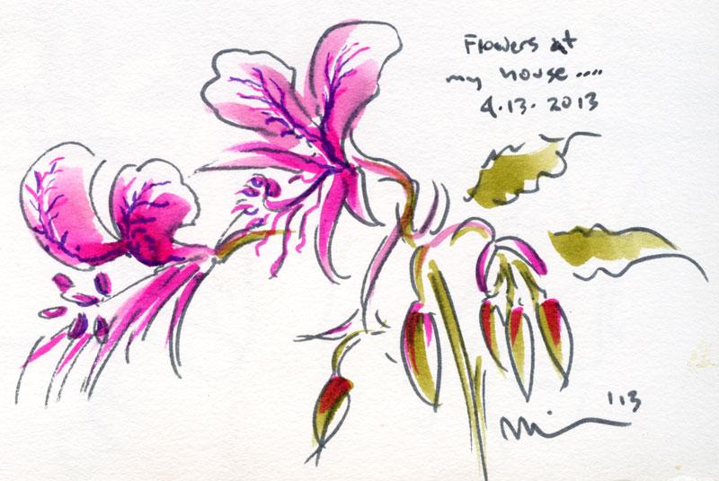 magenta-flowers.jpg