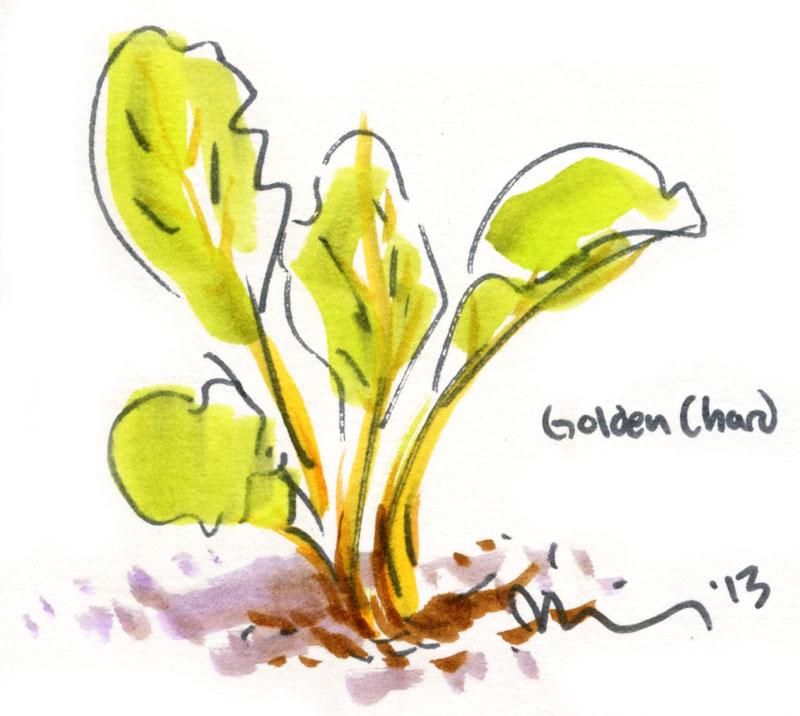 Golden-chard.jpg