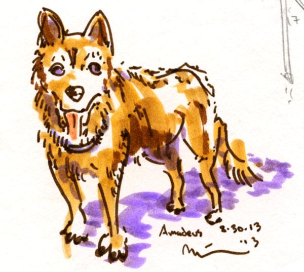 amadeus-doggie.jpg