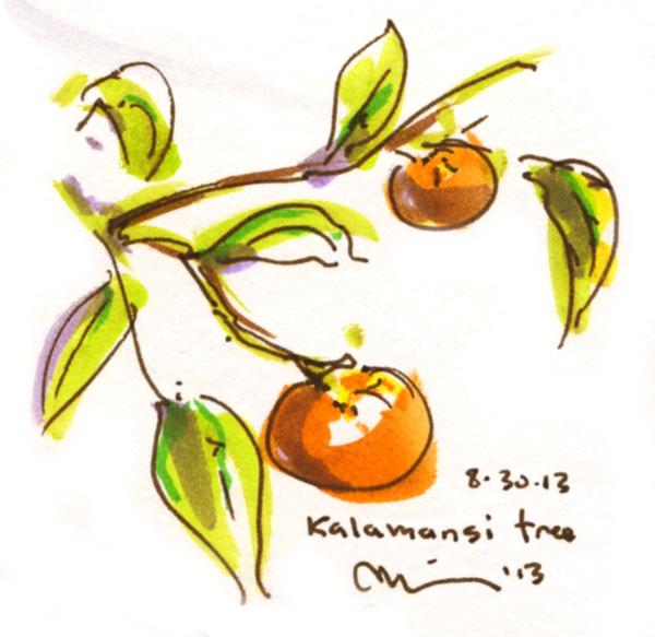 Kalamansi-tree.jpg