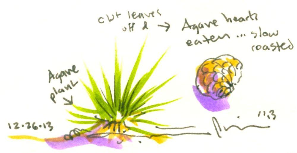 agave hearts.jpg