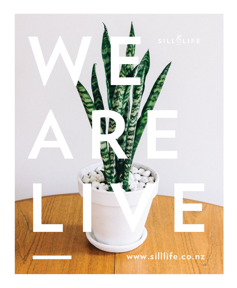we-are-live.jpg