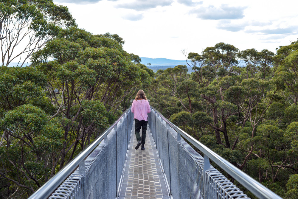 Tree top walk just outside of Denmark, Western Australia.