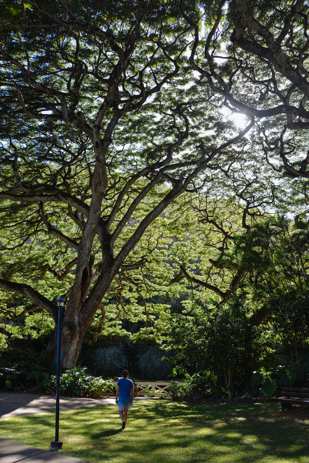 Jonny strolling through the Waimea Valley gardens on Oahu.