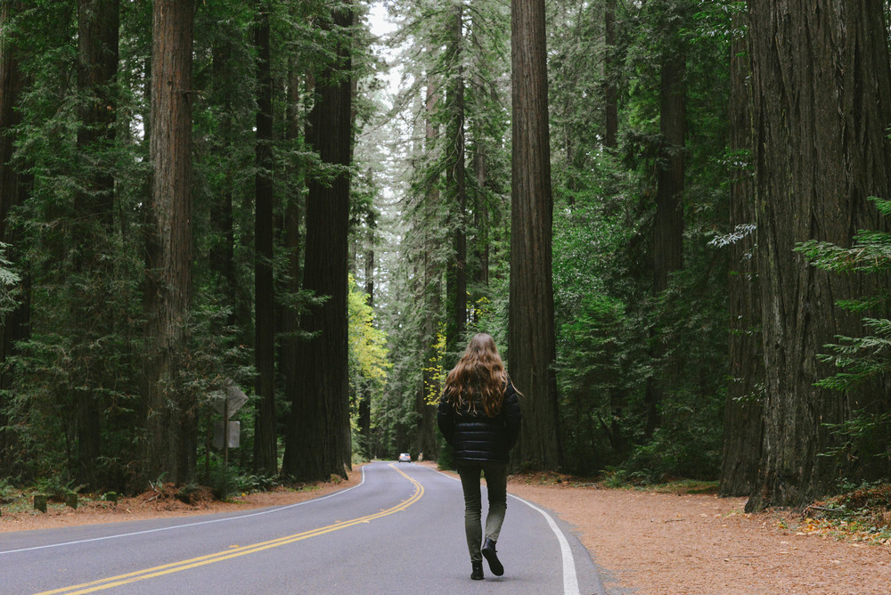 Who thought giant trees would be so amazing. We'll never forget the day we drove through the Avenue of the giants, one of the most beautiful experiences.