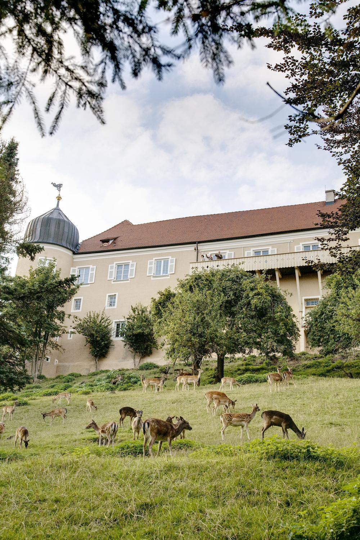 Hirsche_Gehege_SchlossKronburg.jpg