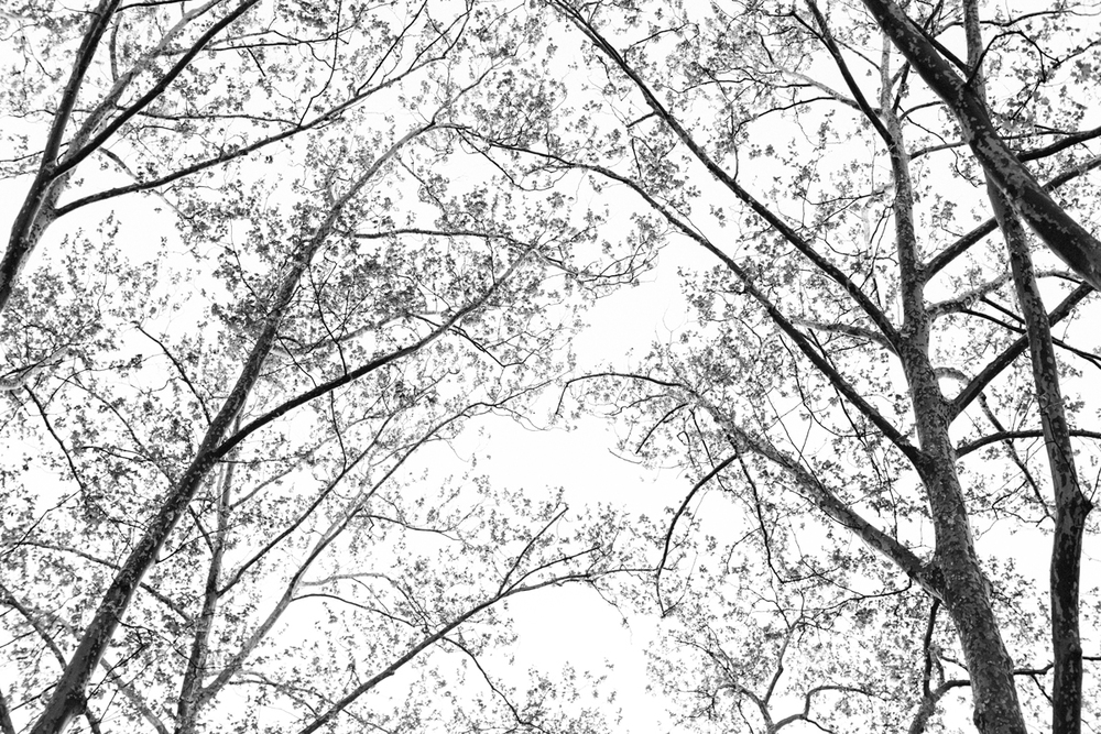 2013_nyc_may-2705.jpg
