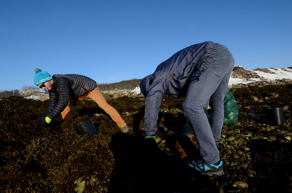 Seaweed harvesting for compost/fertiliser to help Summer's vegetable crops, which WWOOF host Leikny will deliver to 150 customers via a 10 week veg box scheme.