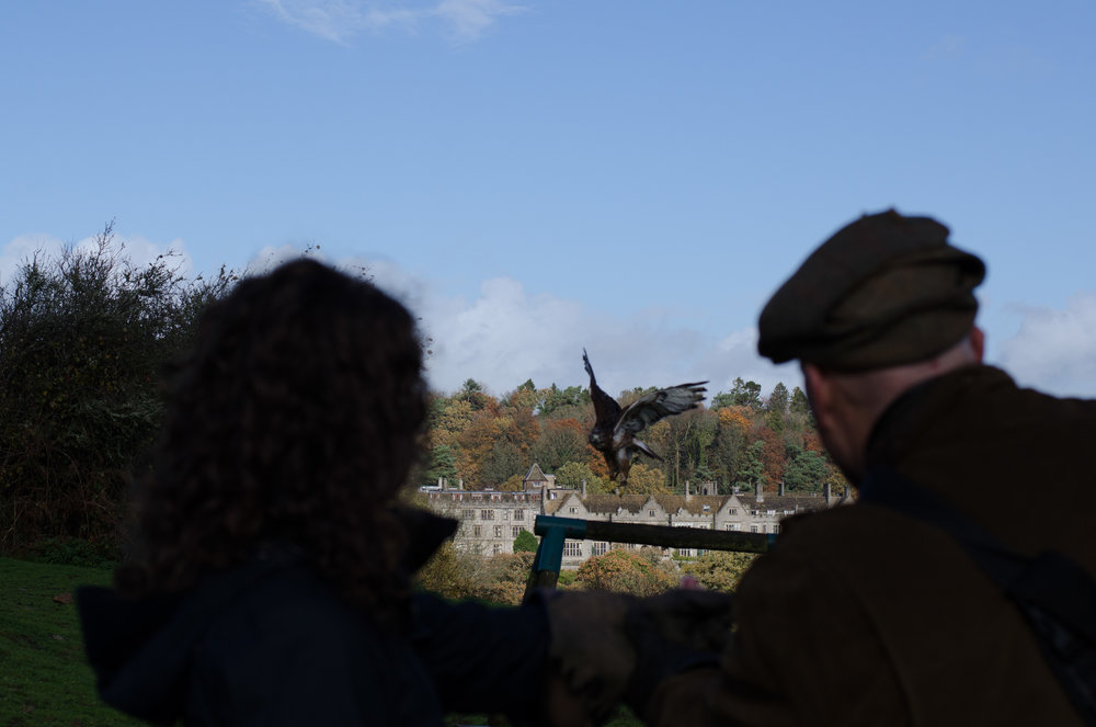 Teaching Kerry to fly the birds, with Bovey Castle in the background.