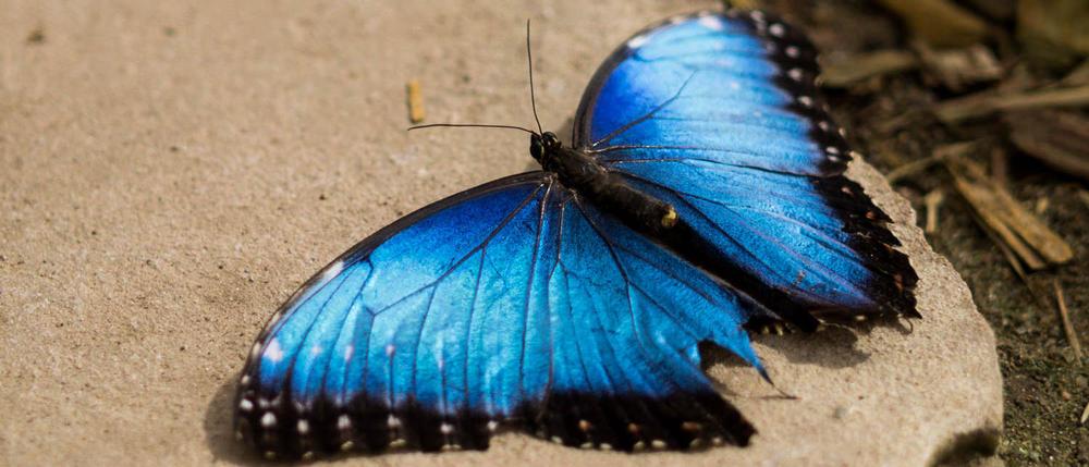 Garten der Schmetterlinge-04-03_mini_cover_mini.jpg