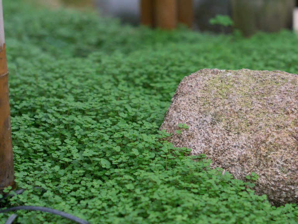 Garten der Schmetterlinge-04-05_mini.jpg