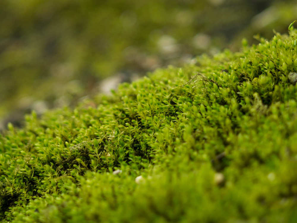 Garten der Schmetterlinge-04-02_mini.jpg