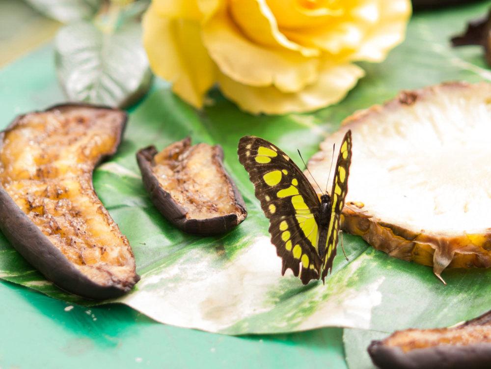 Schmetterling!