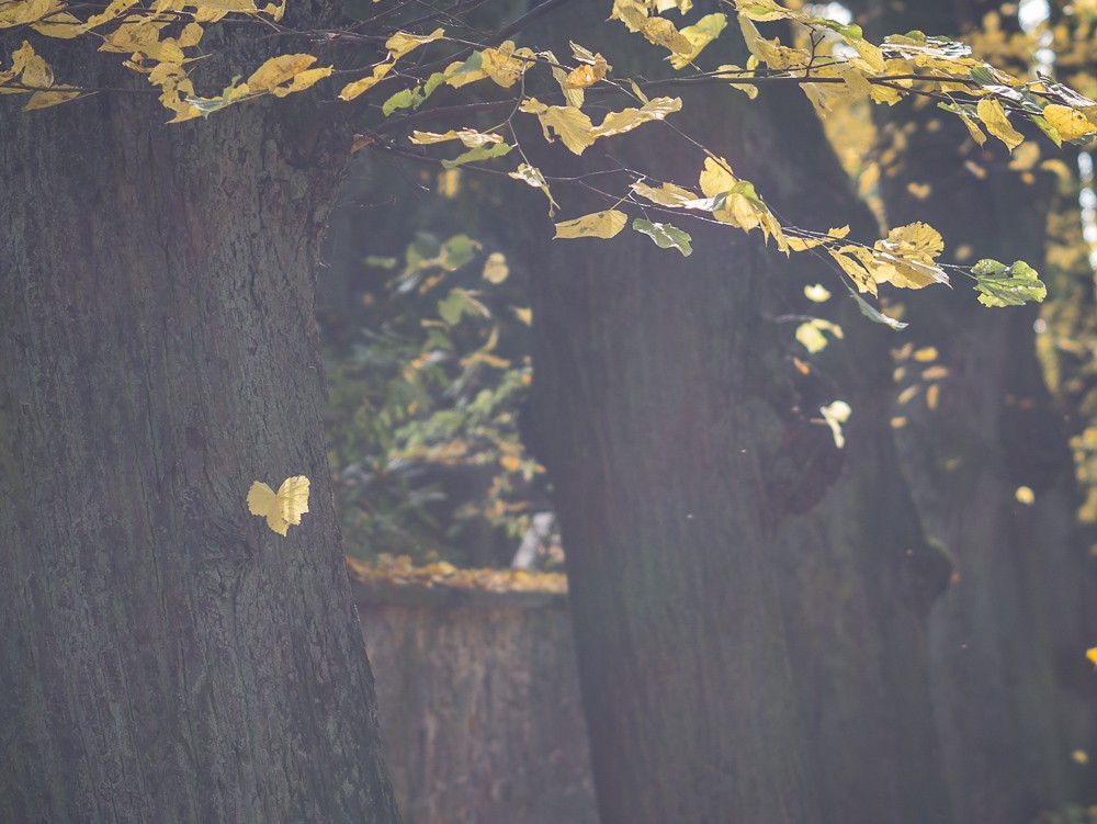 Herbst  - 03.jpg