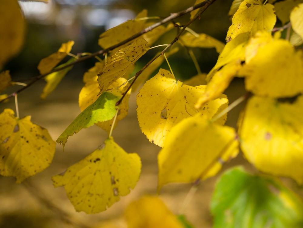 Herbst  - 07.jpg