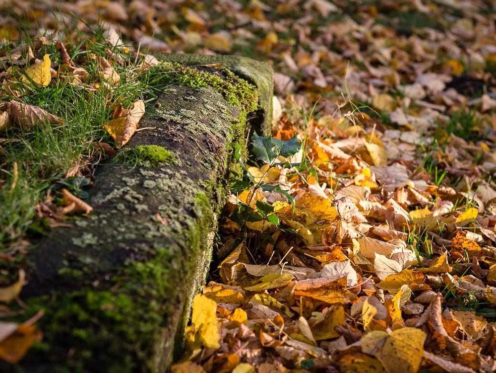 Herbst  - 14.jpg