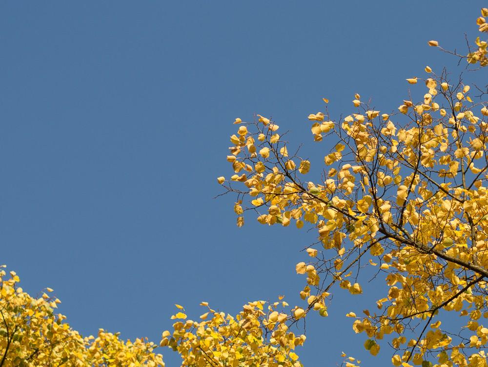Herbst  - 09.jpg