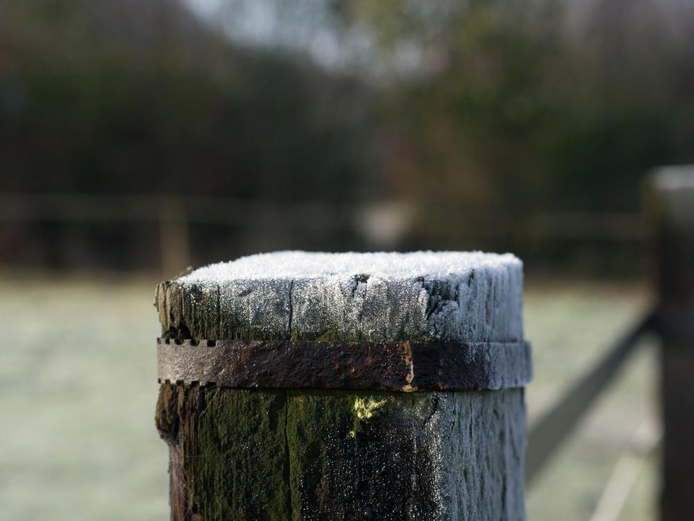 Frost  - 04.jpg