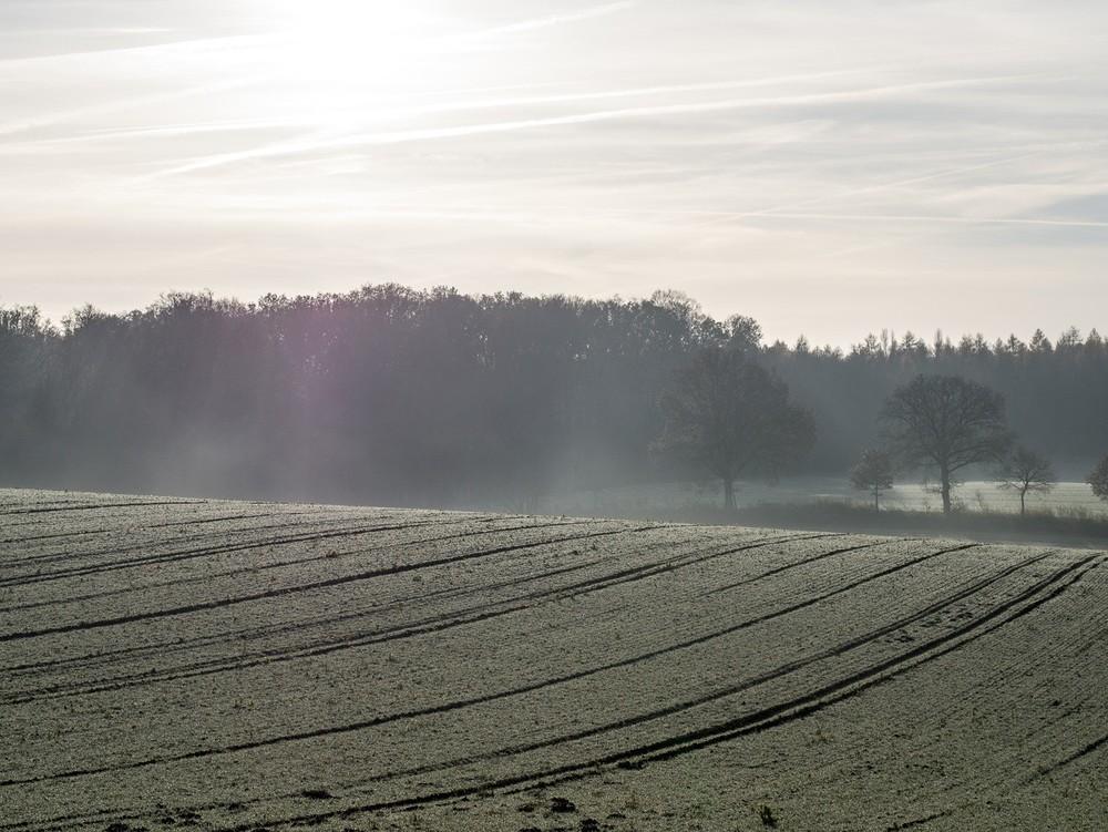 Frost  - 19.jpg