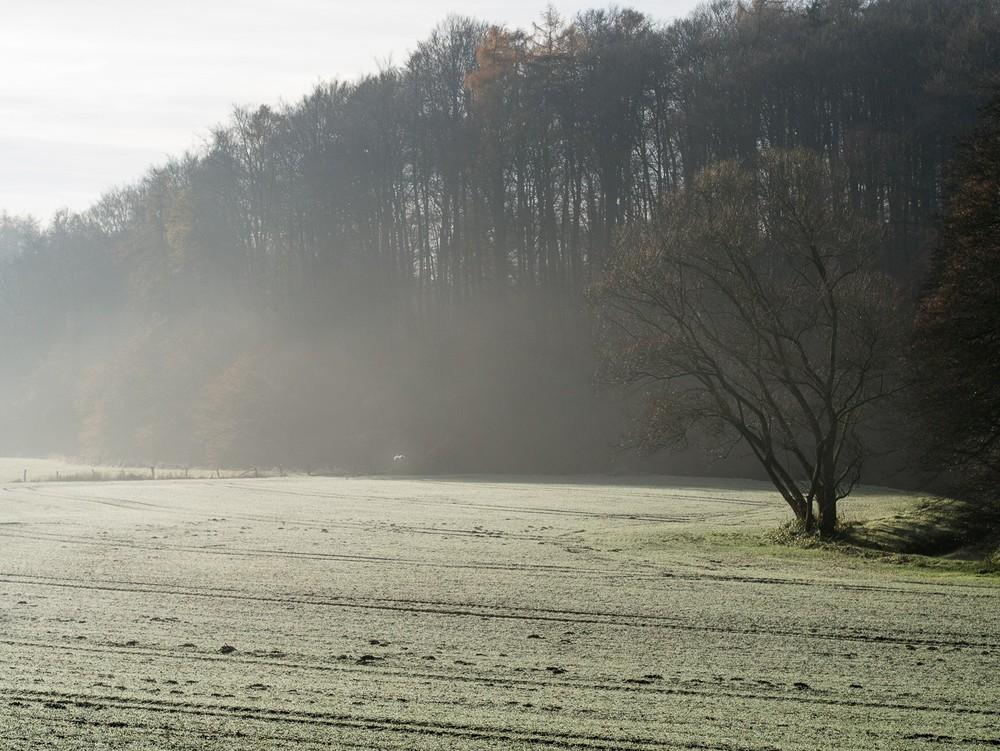 Frostfinale  - 02.jpg