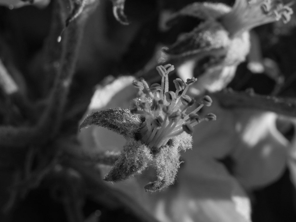 Frostschutzberegnung  - 04.jpg