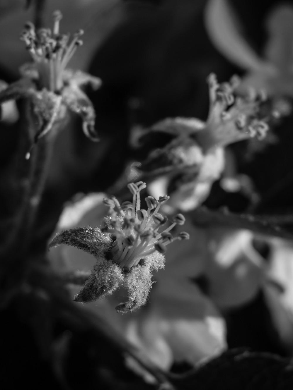 Frostschutzberegnung  - 03.jpg