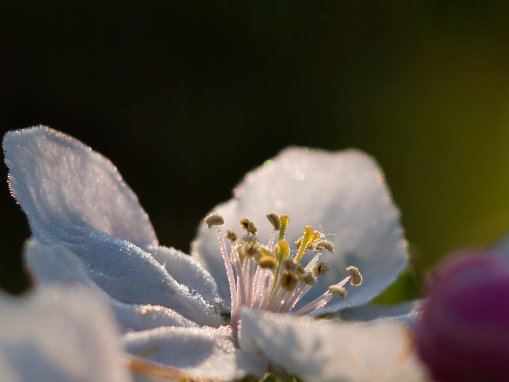 Blüte  - 03.jpg