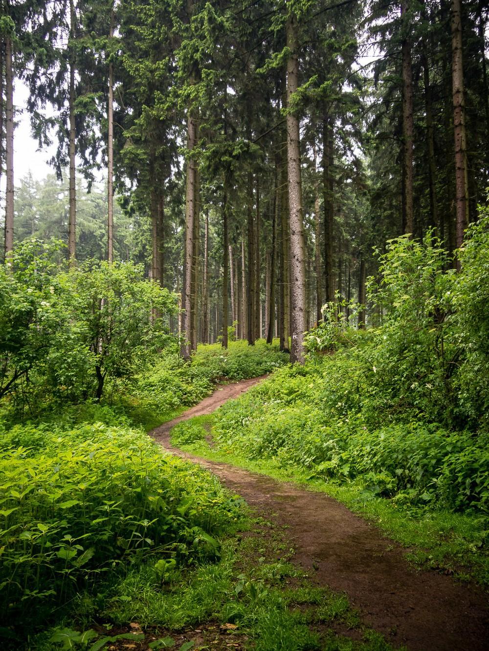 Mai - Wald bei Osnabrueck