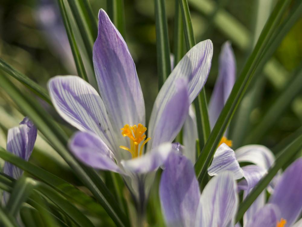 Frühling - 04 - 07.jpg