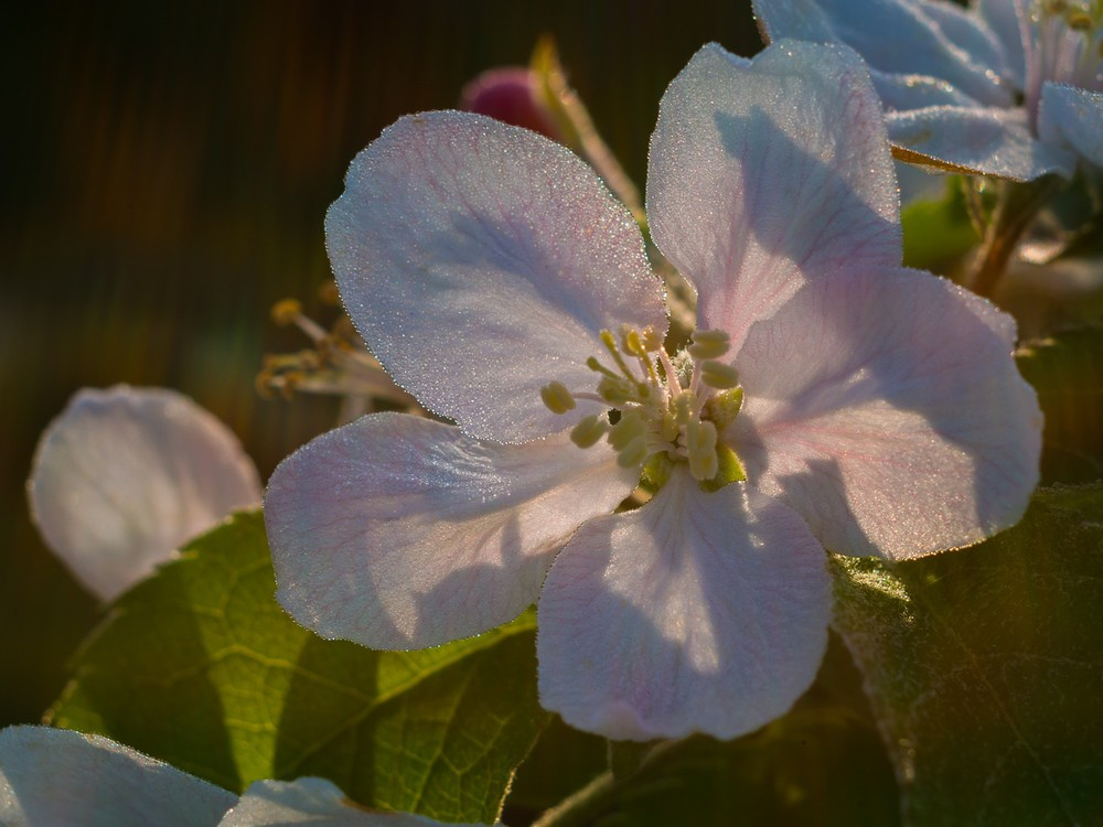 Blüte  - 04.jpg