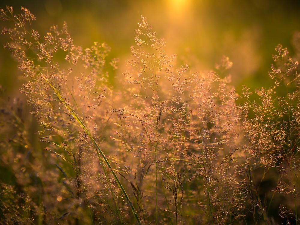 Sommerabend II - Gras summer sun bokeh light makro