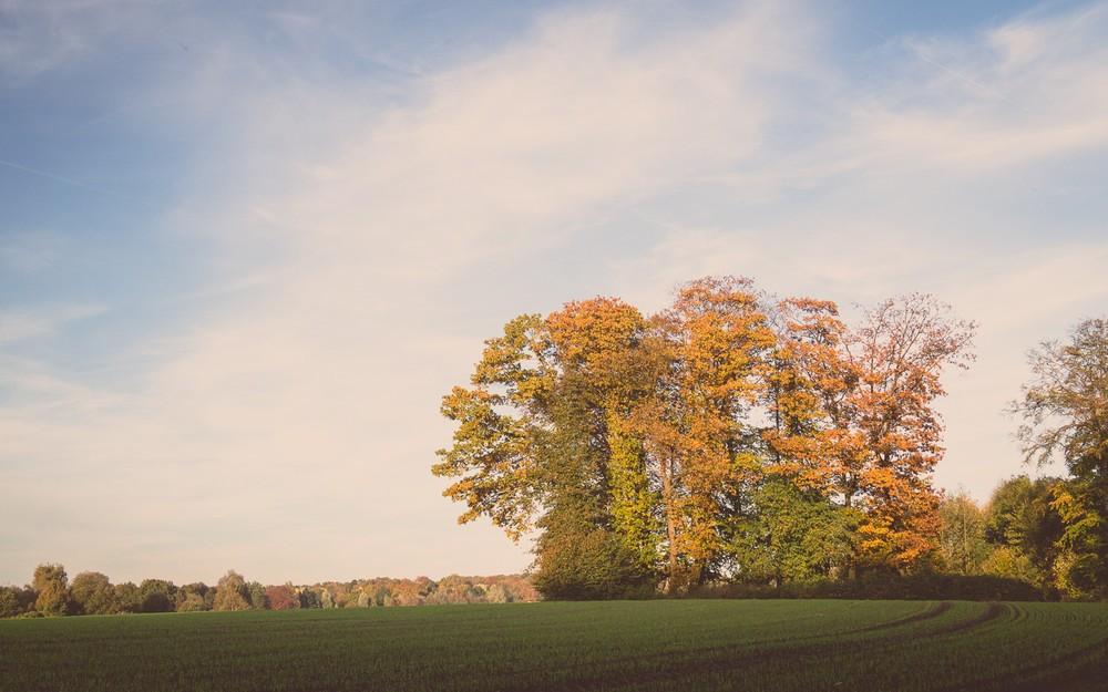 Herbst in osnabrueck laut sonne Himmel