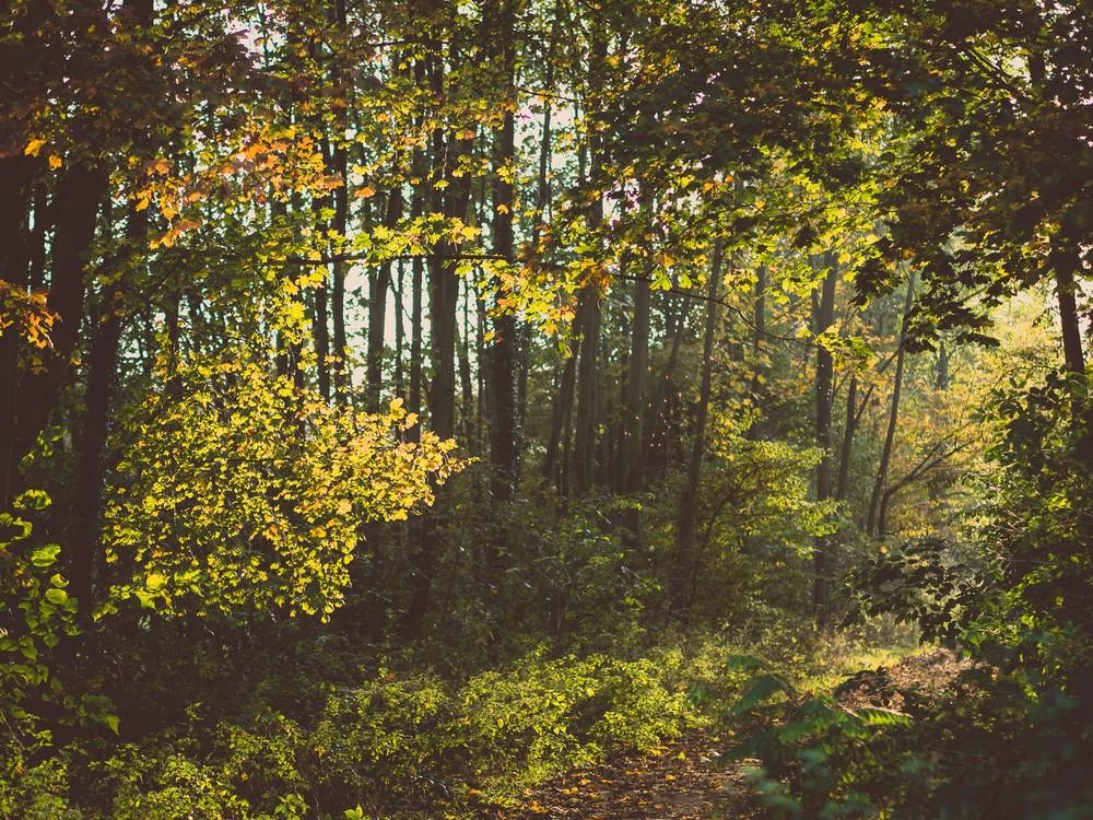 Herbst  - 06.jpg