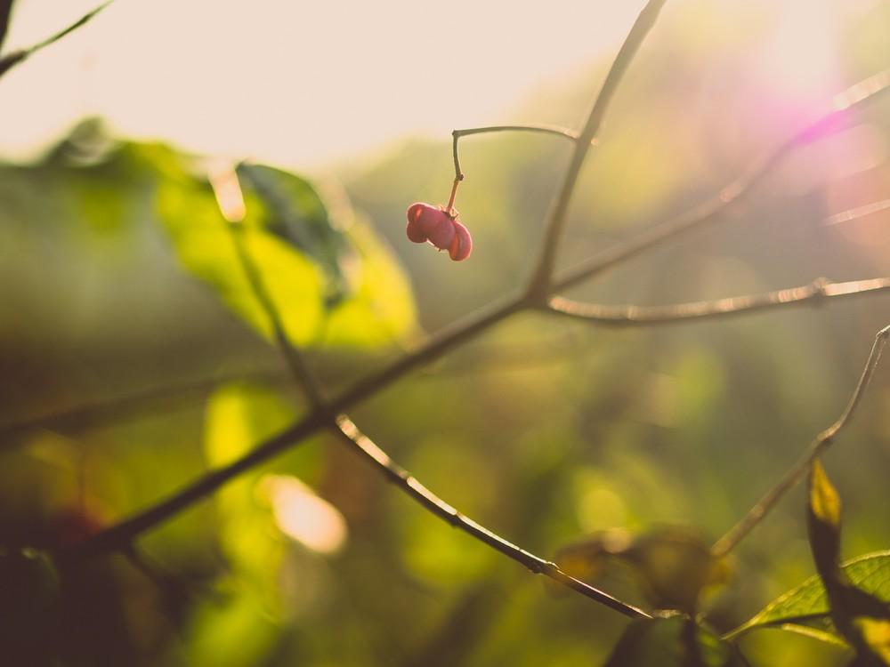 Herbst  - 11.jpg